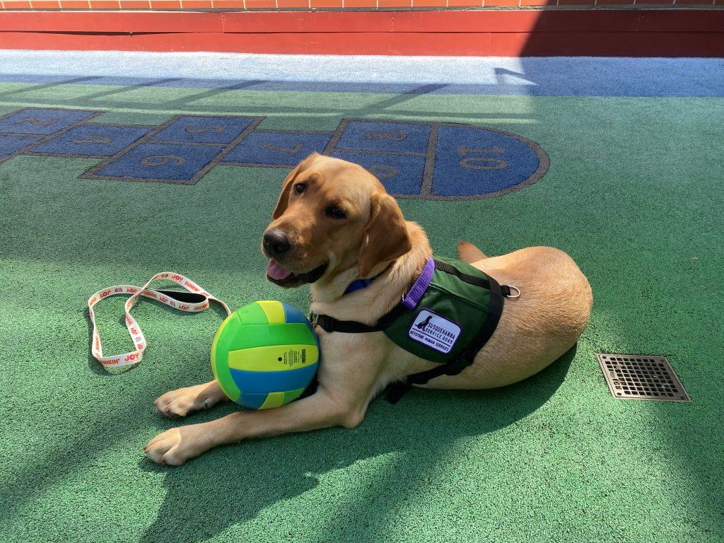 Dilly the support dog with is favorite ball.